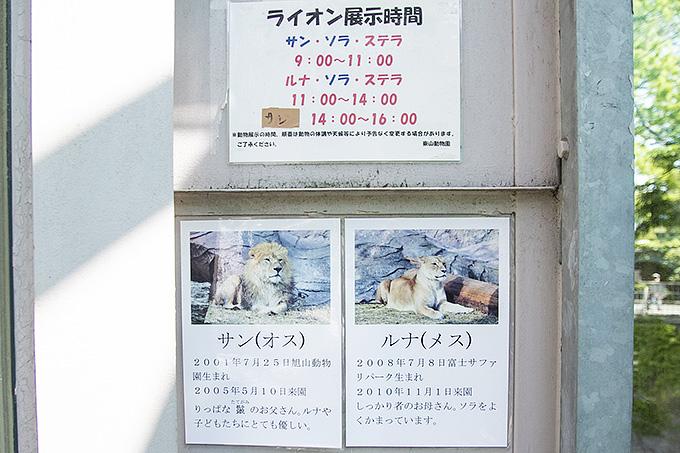 ライオン展示時間